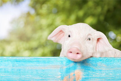 Why Do We Eat Pigs?